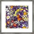 Purple Yellow Orange White Cut Flowers Framed Print