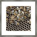 Queen Bee With Worker Bees Framed Print