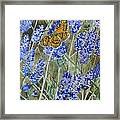 Queen Of Spain Fritillary And Lavender Framed Print