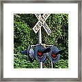 Railroad Crossing Light And Greenery Framed Print