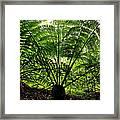 Rainforest Backlight Framed Print
