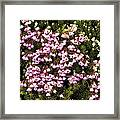 Red And White Mountain Heather Framed Print