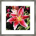 Red And White Tiger Lily Framed Print