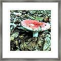 Red And White Wild Mushroom Framed Print