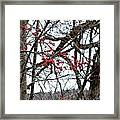 Red Berries White Sky Framed Print