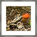 Red Caped Mushroom 1 Framed Print
