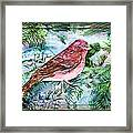 Red Finch Framed Print by Mindy Newman