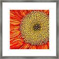 Red Sunflower Iv Framed Print