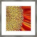 Red Sunflower Viiii Framed Print