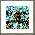 Red Tail Hawk Visitor Framed Print