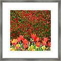 Red Tulip Flowers Framed Print