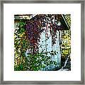 Red Vine Shed Framed Print
