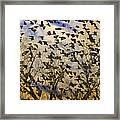 Red-winged Blackbirds At Sunset Framed Print
