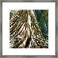 Redwood Trees Forest Art Prints Redwoods Framed Print