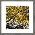 Reflecting Autumn Tree Framed Print