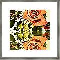 Reflection Of A Warm Rose Framed Print
