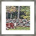 Resting Hereford Framed Print