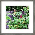 Resting Rosebuds Enhanced Framed Print