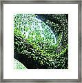 Resurrection Fern Framed Print