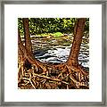 River And Roots Framed Print