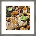 River Stones Framed Print by Steve Gadomski