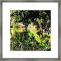 River Through The Trees Framed Print