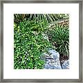 Rock Garden Beauty Framed Print