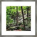 Rocky Forest Of Chatfield Framed Print