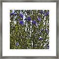 Romaine Lettuce Flowers 2 Framed Print by Donna Munro
