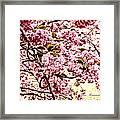 Romantic Cherry Blossoms Framed Print