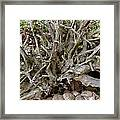 Roots Of Life Framed Print