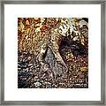 Roots Framed Print by Silvia Ganora
