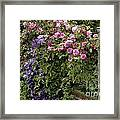 Roses On The Fence Framed Print