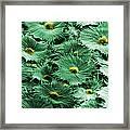 Russian Silverberry Leaf  Framed Print