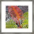 Sadleria Fern Hawaii Framed Print