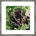 Salad Maker Framed Print