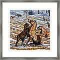Scimitar Cats Attacking A Horse Framed Print
