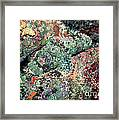 Scorpionfish Framed Print by Gregory G. Dimijian