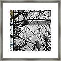 Sea Beyond The Branches Framed Print