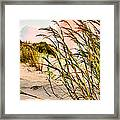 Sea Oats And Dunes Framed Print by Kristin Elmquist