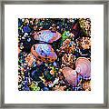 Sea Shells Sea Life Framed Print