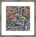 Season Change At Lost Maples Framed Print