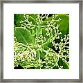 Sedum Droplets Framed Print