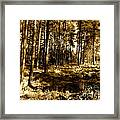 Sepia Forest Framed Print by Jessica Hubner