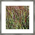 September Grasses By Jrr Framed Print