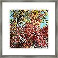 Shades Of Red Framed Print
