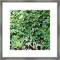 Shadows Of The Sweet Gum Framed Print