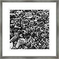 Shells Iv Framed Print