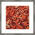 Shrimp Framed Print