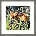 Sibling Rivalry 3 Framed Print